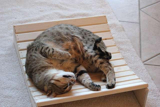 Relax Liege für Katzen